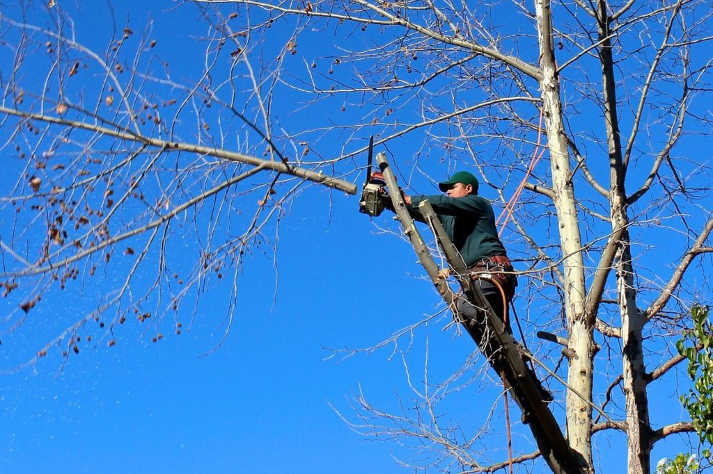 Contact Us-Miami Beach FL Tree Trimming and Stump Grinding Services-We Offer Tree Trimming Services, Tree Removal, Tree Pruning, Tree Cutting, Residential and Commercial Tree Trimming Services, Storm Damage, Emergency Tree Removal, Land Clearing, Tree Companies, Tree Care Service, Stump Grinding, and we're the Best Tree Trimming Company Near You Guaranteed!