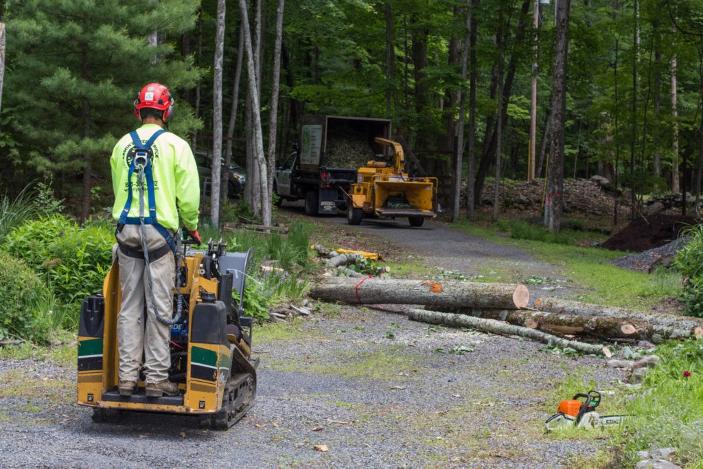 Emergency Tree Removal-Miami Beach FL Tree Trimming and Stump Grinding Services-We Offer Tree Trimming Services, Tree Removal, Tree Pruning, Tree Cutting, Residential and Commercial Tree Trimming Services, Storm Damage, Emergency Tree Removal, Land Clearing, Tree Companies, Tree Care Service, Stump Grinding, and we're the Best Tree Trimming Company Near You Guaranteed!