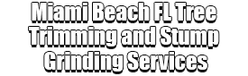 Miami Beach FL Tree Trimming and Stump Grinding Services Logo-We Offer Tree Trimming Services, Tree Removal, Tree Pruning, Tree Cutting, Residential and Commercial Tree Trimming Services, Storm Damage, Emergency Tree Removal, Land Clearing, Tree Companies, Tree Care Service, Stump Grinding, and we're the Best Tree Trimming Company Near You Guaranteed!