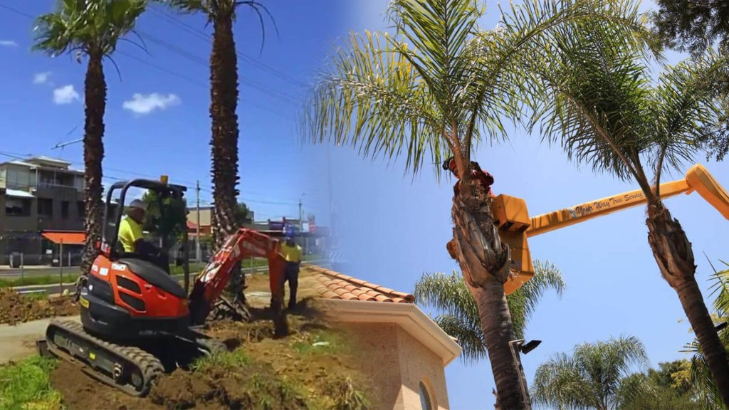Palm tree trimming & palm tree removal-Miami Beach FL Tree Trimming and Stump Grinding Services-We Offer Tree Trimming Services, Tree Removal, Tree Pruning, Tree Cutting, Residential and Commercial Tree Trimming Services, Storm Damage, Emergency Tree Removal, Land Clearing, Tree Companies, Tree Care Service, Stump Grinding, and we're the Best Tree Trimming Company Near You Guaranteed!