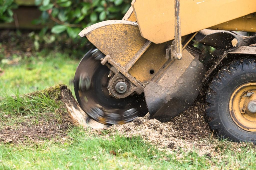 Stump Grinding-Miami Beach FL Tree Trimming and Stump Grinding Services-We Offer Tree Trimming Services, Tree Removal, Tree Pruning, Tree Cutting, Residential and Commercial Tree Trimming Services, Storm Damage, Emergency Tree Removal, Land Clearing, Tree Companies, Tree Care Service, Stump Grinding, and we're the Best Tree Trimming Company Near You Guaranteed!