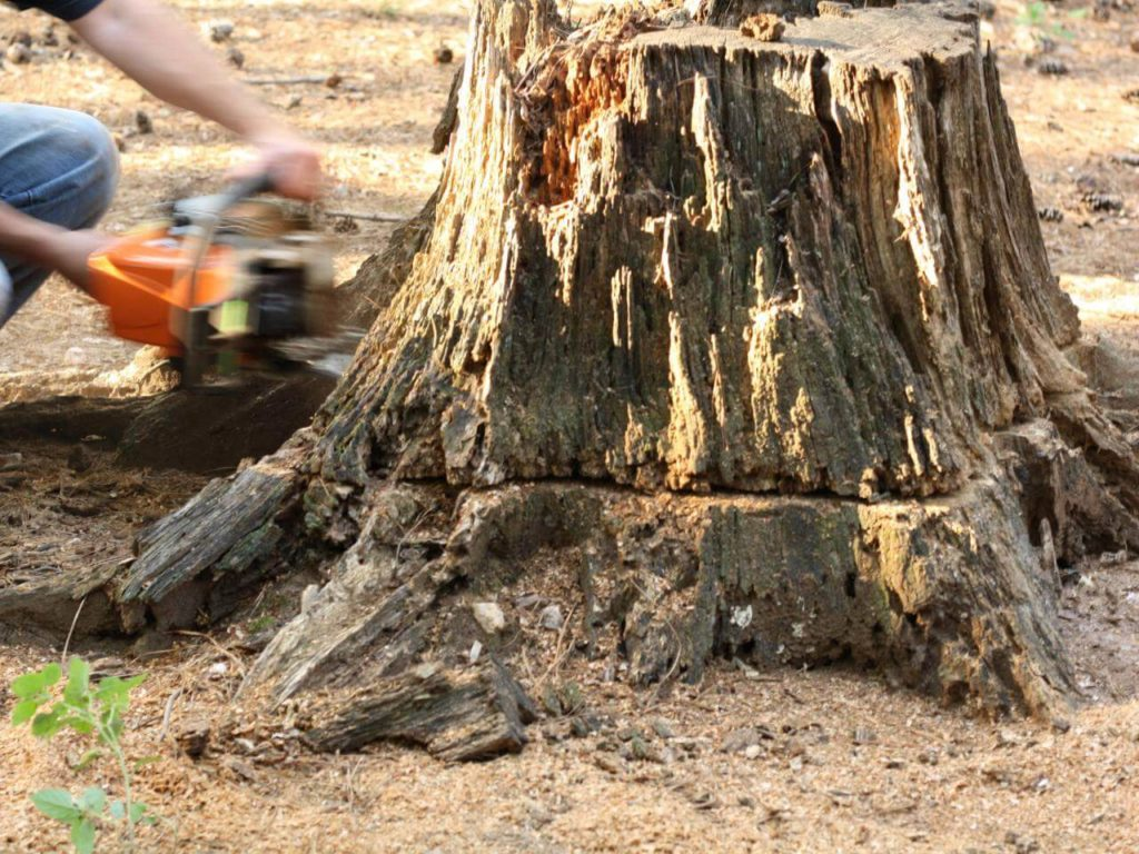 Stump Removal-Miami Beach FL Tree Trimming and Stump Grinding Services-We Offer Tree Trimming Services, Tree Removal, Tree Pruning, Tree Cutting, Residential and Commercial Tree Trimming Services, Storm Damage, Emergency Tree Removal, Land Clearing, Tree Companies, Tree Care Service, Stump Grinding, and we're the Best Tree Trimming Company Near You Guaranteed!