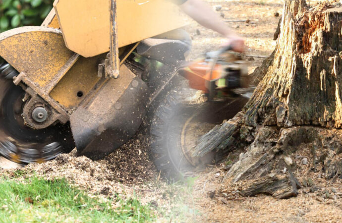 Stump grinding & removal-Miami Beach FL Tree Trimming and Stump Grinding Services-We Offer Tree Trimming Services, Tree Removal, Tree Pruning, Tree Cutting, Residential and Commercial Tree Trimming Services, Storm Damage, Emergency Tree Removal, Land Clearing, Tree Companies, Tree Care Service, Stump Grinding, and we're the Best Tree Trimming Company Near You Guaranteed!