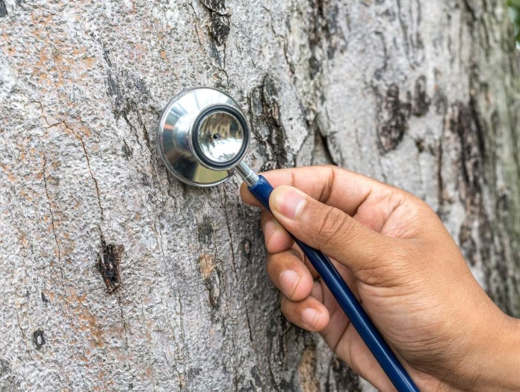 Tree Assessments-Miami Beach FL Tree Trimming and Stump Grinding Services-We Offer Tree Trimming Services, Tree Removal, Tree Pruning, Tree Cutting, Residential and Commercial Tree Trimming Services, Storm Damage, Emergency Tree Removal, Land Clearing, Tree Companies, Tree Care Service, Stump Grinding, and we're the Best Tree Trimming Company Near You Guaranteed!
