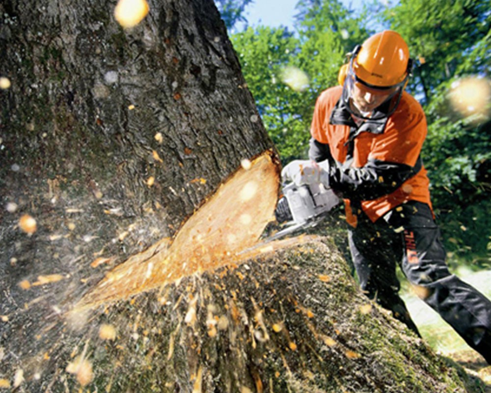 Tree Cutting-Miami Beach FL Tree Trimming and Stump Grinding Services-We Offer Tree Trimming Services, Tree Removal, Tree Pruning, Tree Cutting, Residential and Commercial Tree Trimming Services, Storm Damage, Emergency Tree Removal, Land Clearing, Tree Companies, Tree Care Service, Stump Grinding, and we're the Best Tree Trimming Company Near You Guaranteed!