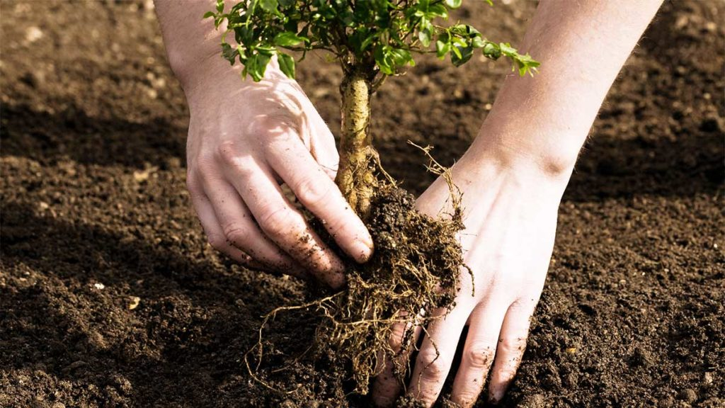 Tree Planting-Miami Beach FL Tree Trimming and Stump Grinding Services-We Offer Tree Trimming Services, Tree Removal, Tree Pruning, Tree Cutting, Residential and Commercial Tree Trimming Services, Storm Damage, Emergency Tree Removal, Land Clearing, Tree Companies, Tree Care Service, Stump Grinding, and we're the Best Tree Trimming Company Near You Guaranteed!