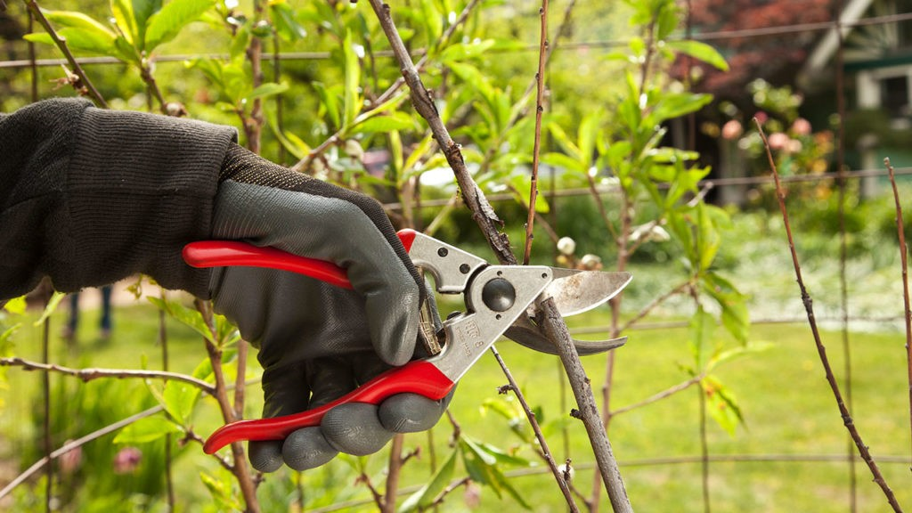 Tree Pruning-Miami Beach FL Tree Trimming and Stump Grinding Services-We Offer Tree Trimming Services, Tree Removal, Tree Pruning, Tree Cutting, Residential and Commercial Tree Trimming Services, Storm Damage, Emergency Tree Removal, Land Clearing, Tree Companies, Tree Care Service, Stump Grinding, and we're the Best Tree Trimming Company Near You Guaranteed!