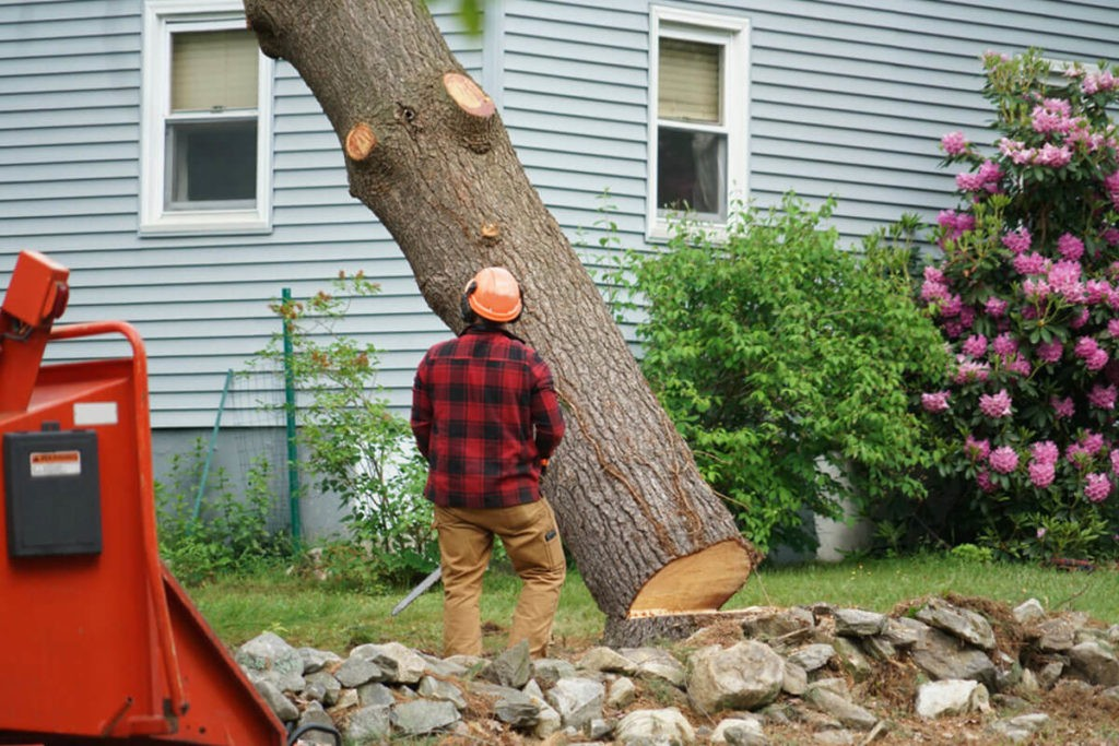 Tree Removal-Miami Beach FL Tree Trimming and Stump Grinding Services-We Offer Tree Trimming Services, Tree Removal, Tree Pruning, Tree Cutting, Residential and Commercial Tree Trimming Services, Storm Damage, Emergency Tree Removal, Land Clearing, Tree Companies, Tree Care Service, Stump Grinding, and we're the Best Tree Trimming Company Near You Guaranteed!
