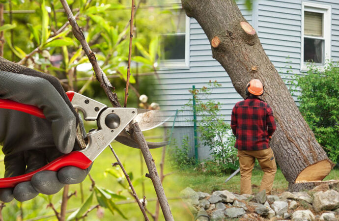 Tree pruning & tree removal-Miami Beach FL Tree Trimming and Stump Grinding Services-We Offer Tree Trimming Services, Tree Removal, Tree Pruning, Tree Cutting, Residential and Commercial Tree Trimming Services, Storm Damage, Emergency Tree Removal, Land Clearing, Tree Companies, Tree Care Service, Stump Grinding, and we're the Best Tree Trimming Company Near You Guaranteed!